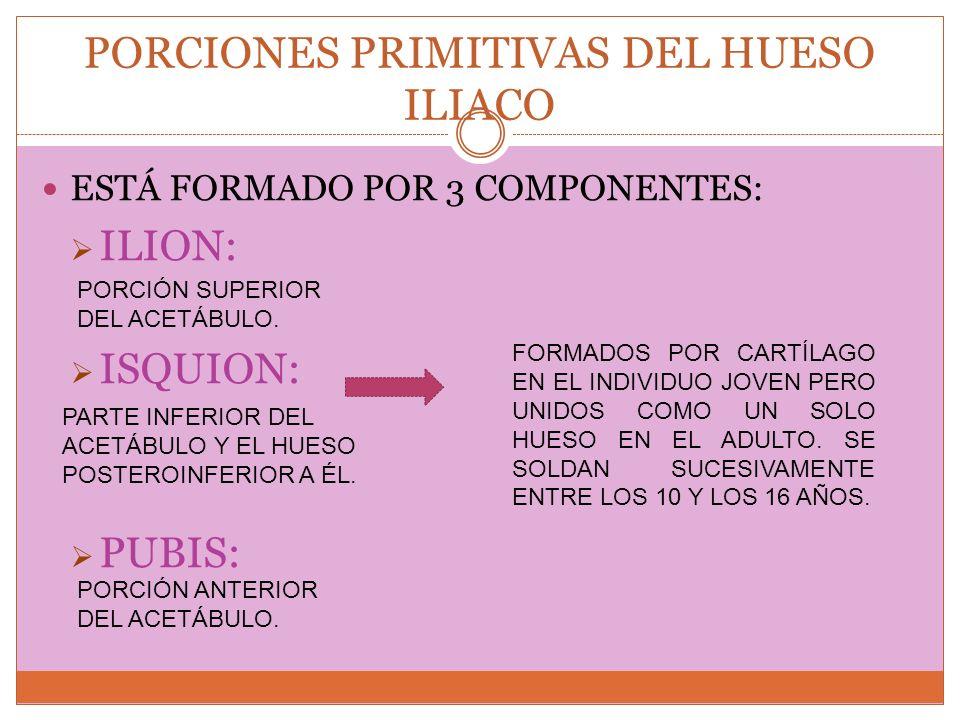 PORCIONES PRIMITIVAS DEL HUESO ILIACO