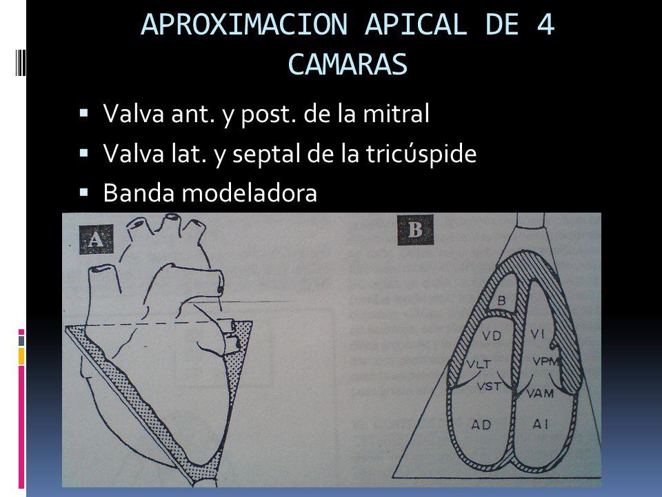 APROXIMACION APICAL DE 4 CAMARAS