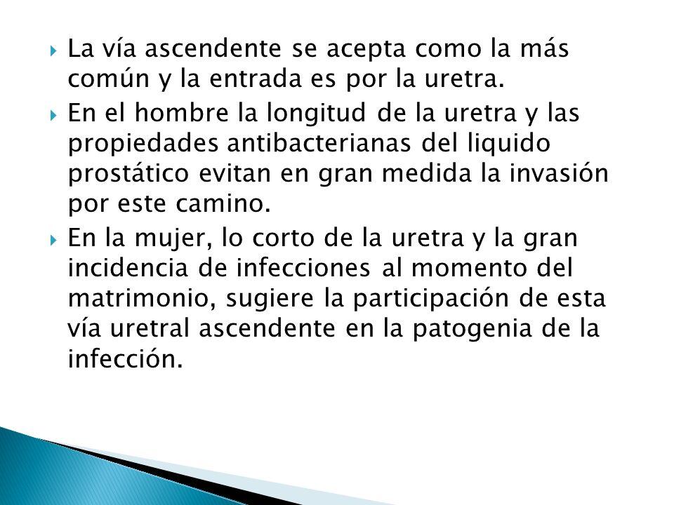 La vía ascendente se acepta como la más común y la entrada es por la uretra.