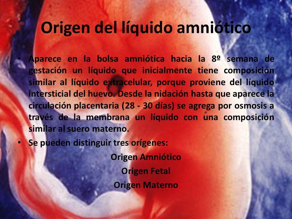 Origen del líquido amniótico