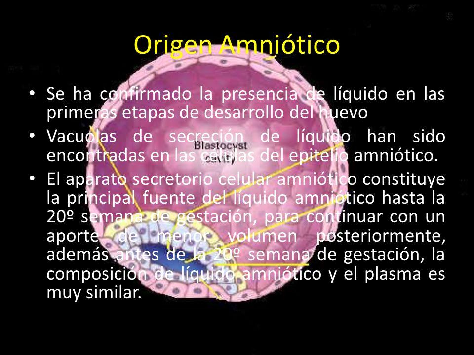 Origen Amniótico Se ha confirmado la presencia de líquido en las primeras etapas de desarrollo del huevo.