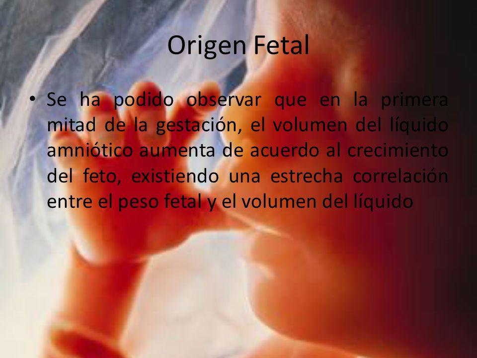 Origen Fetal