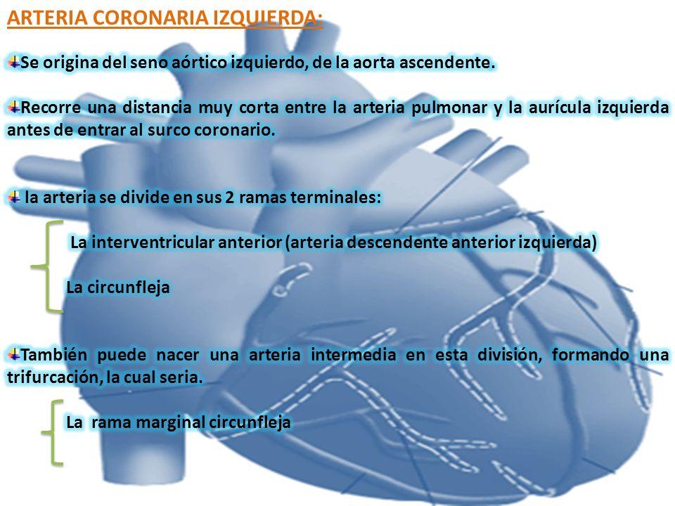 ARTERIA CORONARIA IZQUIERDA: