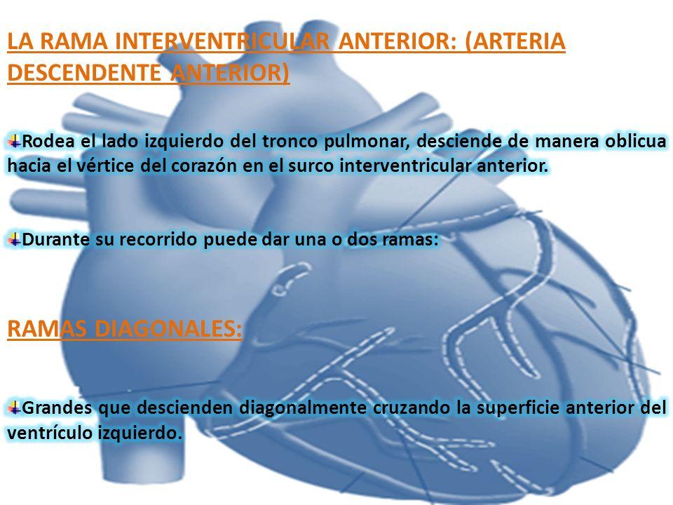 LA RAMA INTERVENTRICULAR ANTERIOR: (ARTERIA DESCENDENTE ANTERIOR)