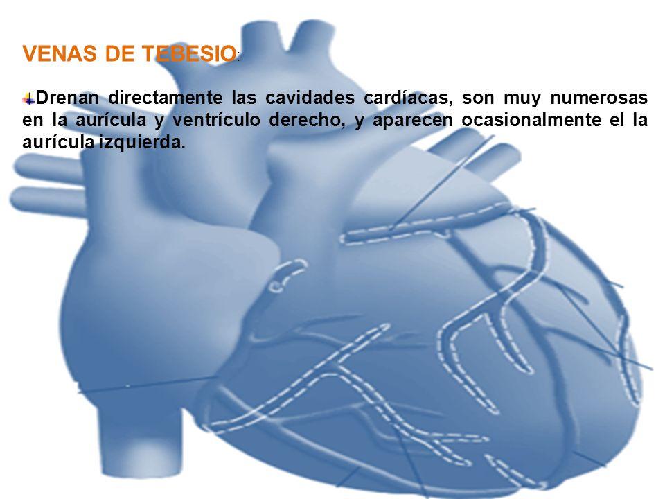 VENAS DE TEBESIO: