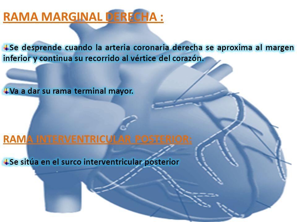 RAMA MARGINAL DERECHA :