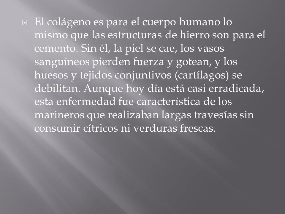 El colágeno es para el cuerpo humano lo mismo que las estructuras de hierro son para el cemento.