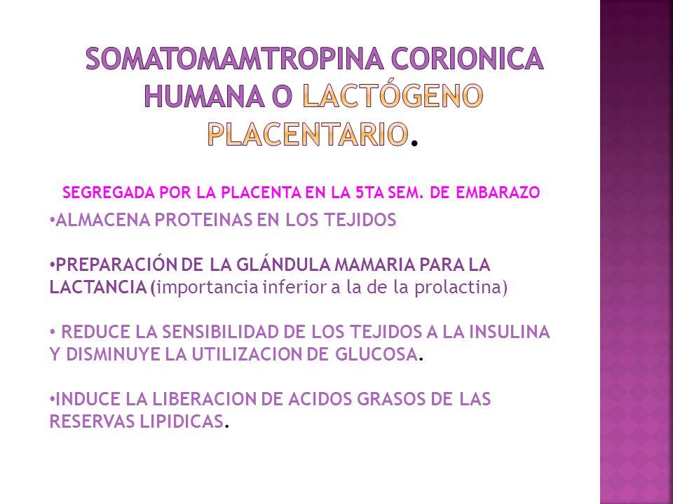 SOMATOMAMTROPINA CORIONICA HUMANA O Lactógeno placentario.
