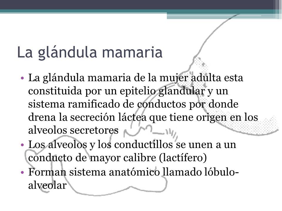 La glándula mamaria
