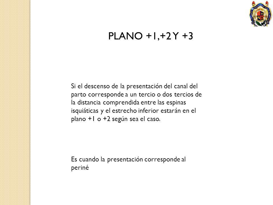 PLANO +1,+2 Y +3