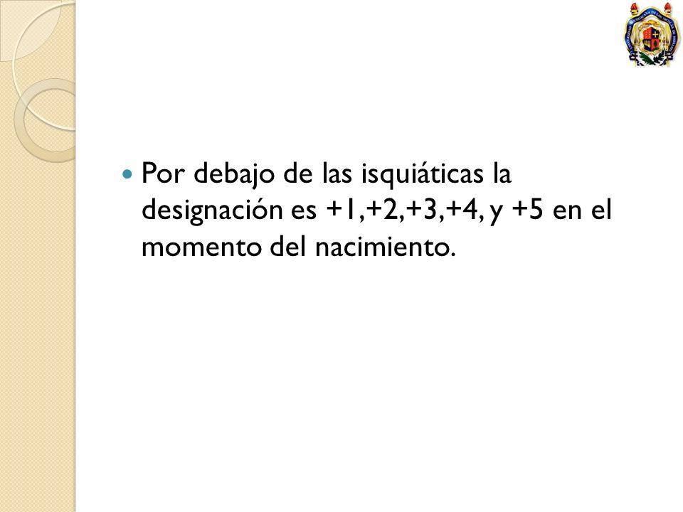 Por debajo de las isquiáticas la designación es +1,+2,+3,+4, y +5 en el momento del nacimiento.