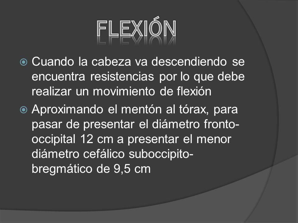 FLEXIÓN Cuando la cabeza va descendiendo se encuentra resistencias por lo que debe realizar un movimiento de flexión.