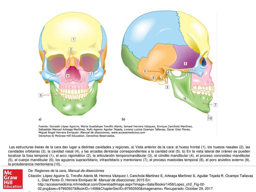 Hermosa Anatomía De Un Arco Embellecimiento - Imágenes de Anatomía ...