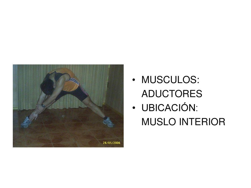 Hermosa Músculo Del Muslo Anatomía Ct Fotos - Anatomía de Las ...