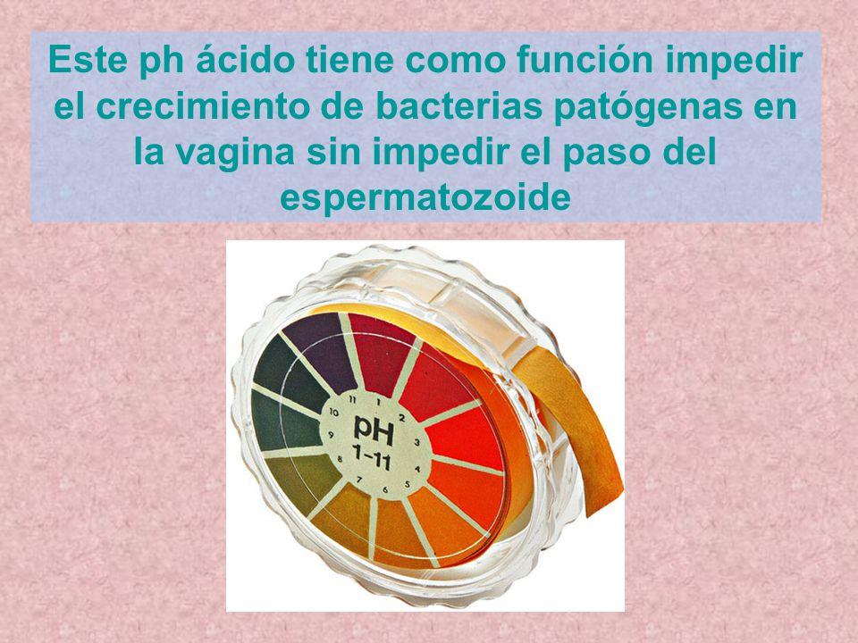 Este ph ácido tiene como función impedir el crecimiento de bacterias patógenas en la vagina sin impedir el paso del espermatozoide