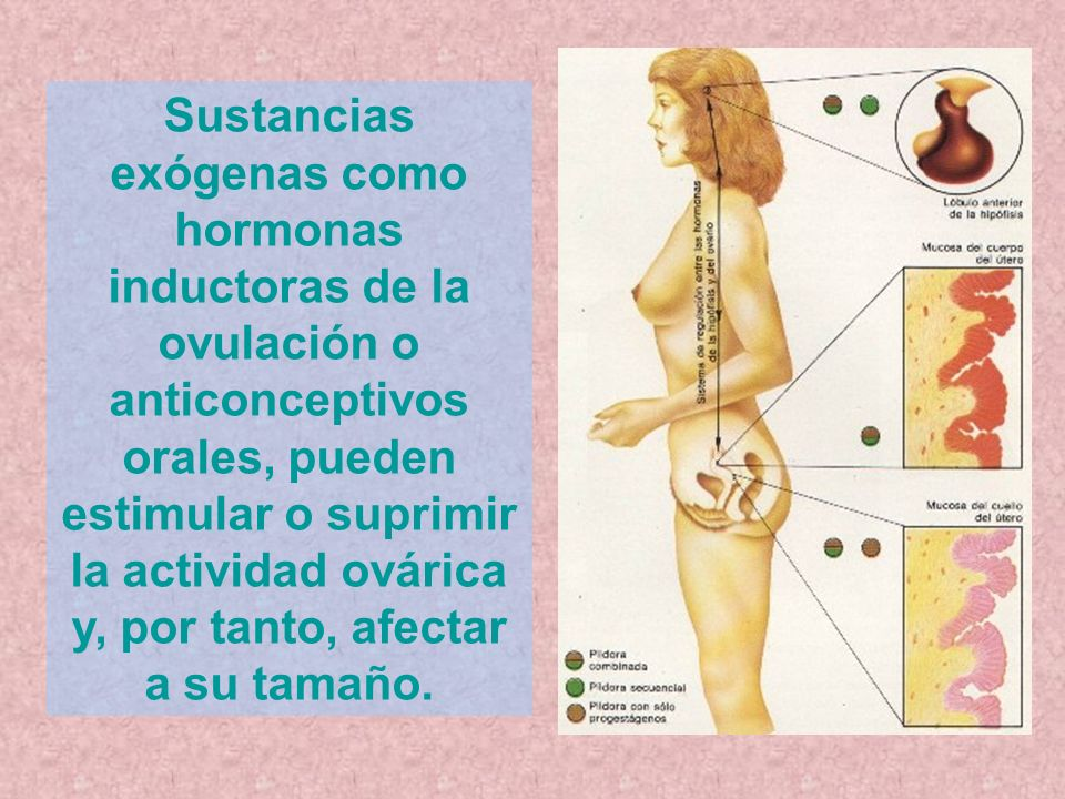Sustancias exógenas como hormonas inductoras de la ovulación o anticonceptivos orales, pueden estimular o suprimir la actividad ovárica y, por tanto, afectar a su tamaño.