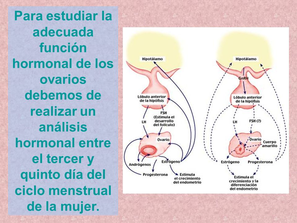 Para estudiar la adecuada función hormonal de los ovarios debemos de realizar un análisis hormonal entre el tercer y quinto día del ciclo menstrual de la mujer.