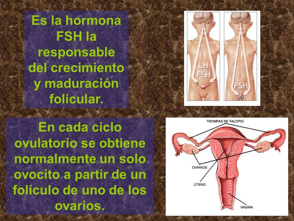 Es la hormona FSH la responsable del crecimiento y maduración folicular.