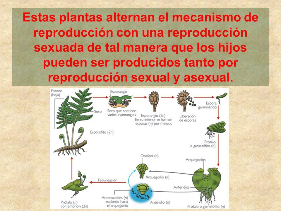 Estas plantas alternan el mecanismo de reproducción con una reproducción sexuada de tal manera que los hijos pueden ser producidos tanto por reproducción sexual y asexual.