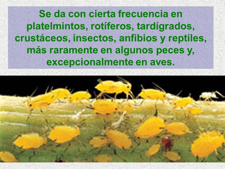 Se da con cierta frecuencia en platelmintos, rotíferos, tardígrados, crustáceos, insectos, anfibios y reptiles, más raramente en algunos peces y, excepcionalmente en aves.