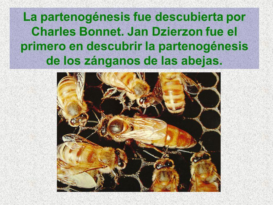 La partenogénesis fue descubierta por Charles Bonnet