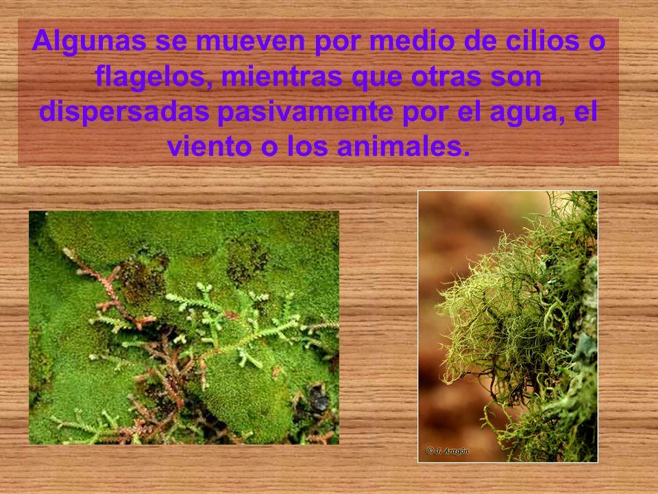 Algunas se mueven por medio de cilios o flagelos, mientras que otras son dispersadas pasivamente por el agua, el viento o los animales.