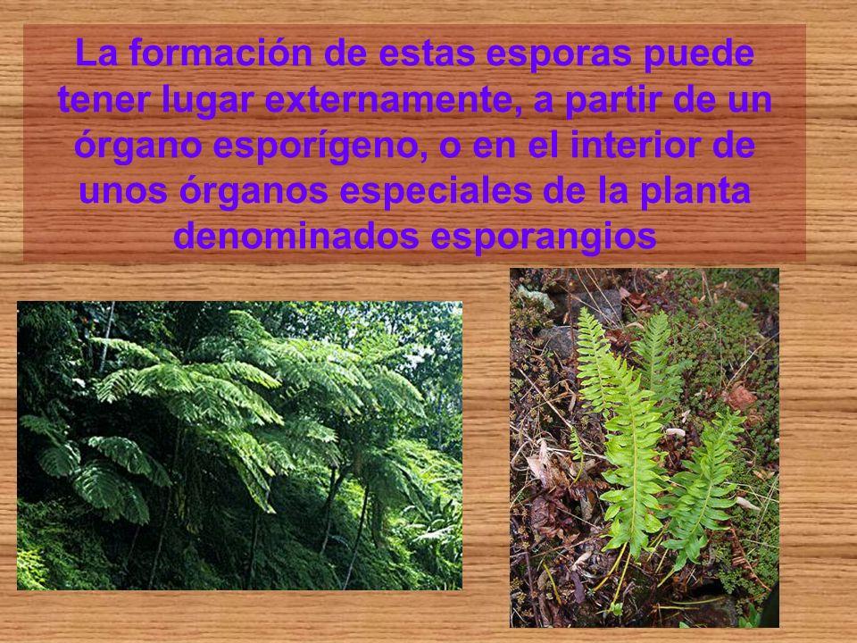 La formación de estas esporas puede tener lugar externamente, a partir de un órgano esporígeno, o en el interior de unos órganos especiales de la planta denominados esporangios