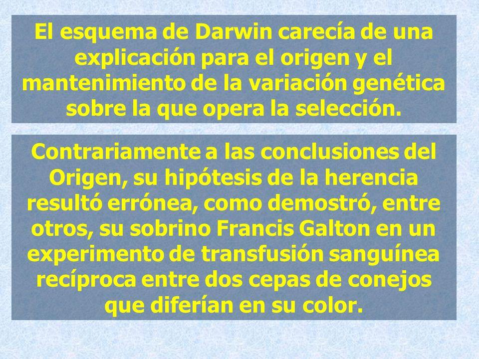 El esquema de Darwin carecía de una explicación para el origen y el mantenimiento de la variación genética sobre la que opera la selección.