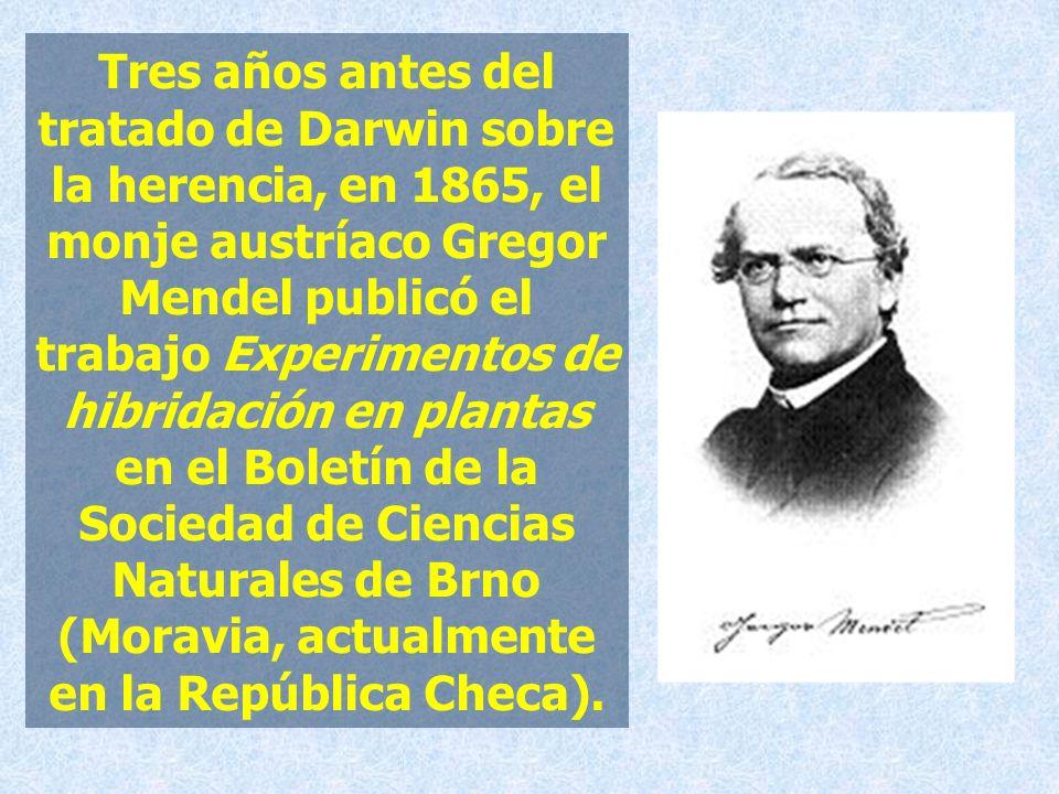 Tres años antes del tratado de Darwin sobre la herencia, en 1865, el monje austríaco Gregor Mendel publicó el trabajo Experimentos de hibridación en plantas en el Boletín de la Sociedad de Ciencias Naturales de Brno (Moravia, actualmente en la República Checa).