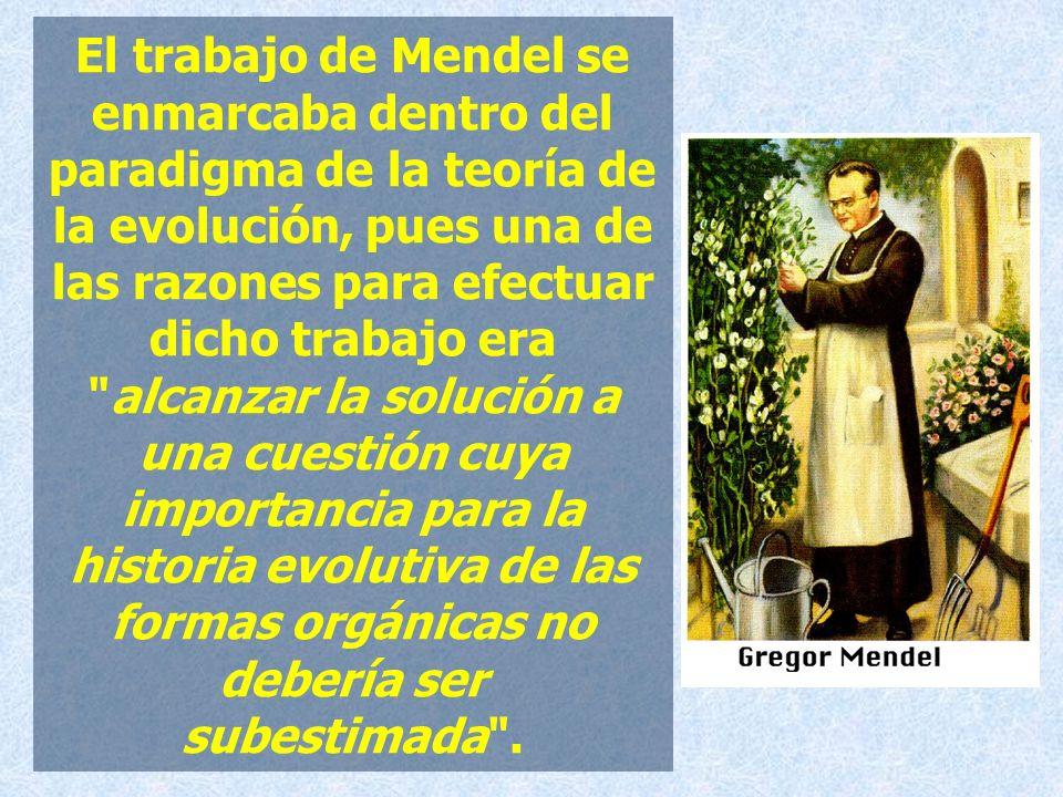 El trabajo de Mendel se enmarcaba dentro del paradigma de la teoría de la evolución, pues una de las razones para efectuar dicho trabajo era alcanzar la solución a una cuestión cuya importancia para la historia evolutiva de las formas orgánicas no debería ser subestimada .