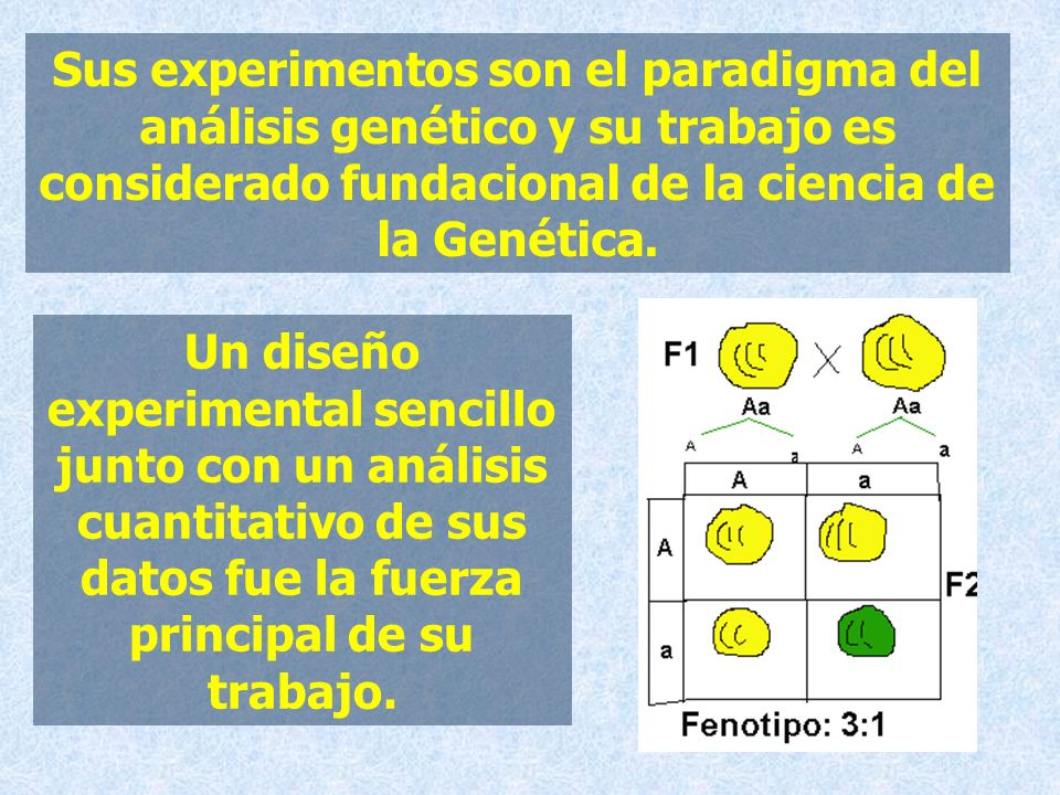 Sus experimentos son el paradigma del análisis genético y su trabajo es considerado fundacional de la ciencia de la Genética.
