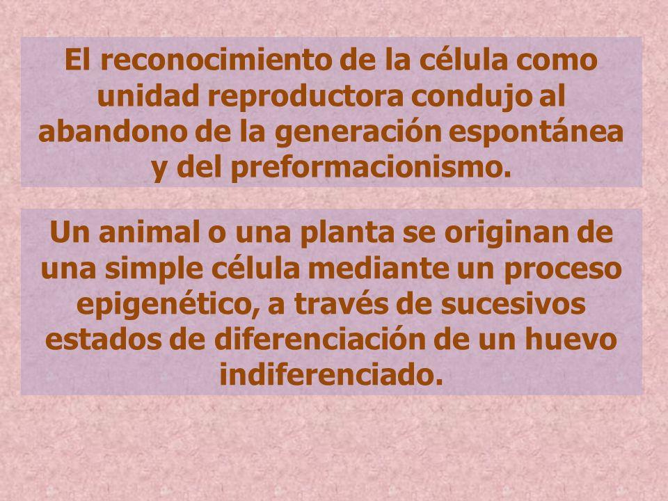 El reconocimiento de la célula como unidad reproductora condujo al abandono de la generación espontánea y del preformacionismo.