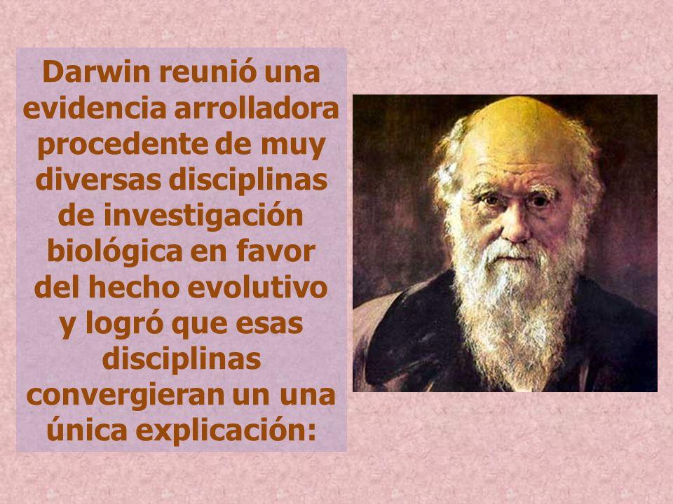 Darwin reunió una evidencia arrolladora procedente de muy diversas disciplinas de investigación biológica en favor del hecho evolutivo y logró que esas disciplinas convergieran un una única explicación: