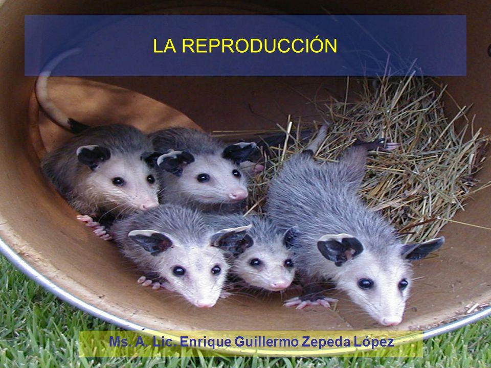 Ms. A. Lic. Enrique Guillermo Zepeda López