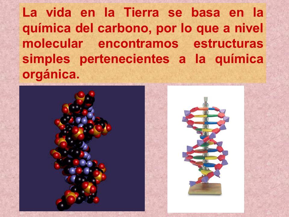 La vida en la Tierra se basa en la química del carbono, por lo que a nivel molecular encontramos estructuras simples pertenecientes a la química orgánica.