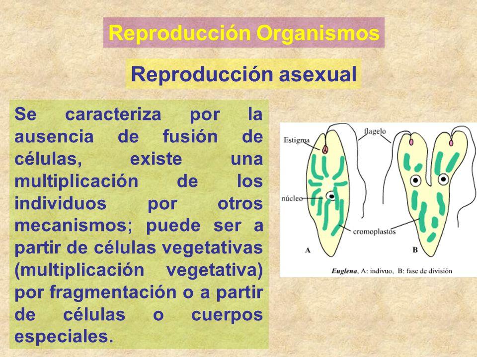 Reproducción Organismos