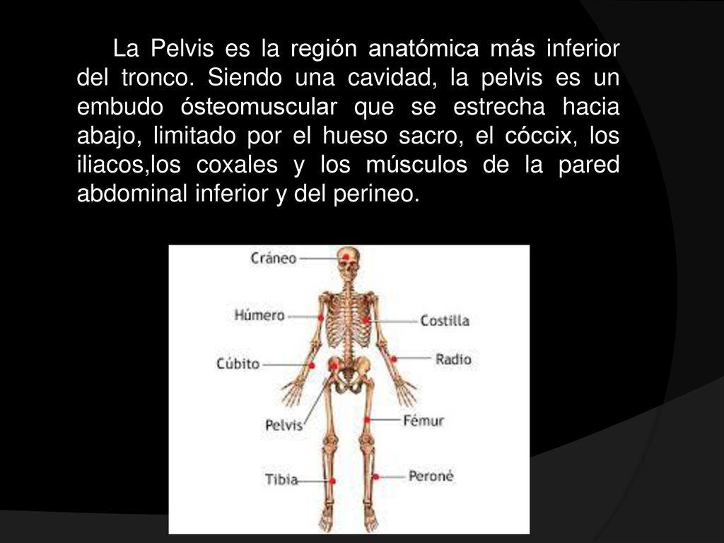 Perfecto Ct Abdomen Y Pelvis Anatomía Imágenes - Imágenes de ...