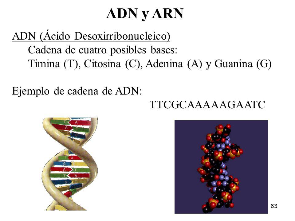 ADN y ARN ADN (Ácido Desoxirribonucleico)
