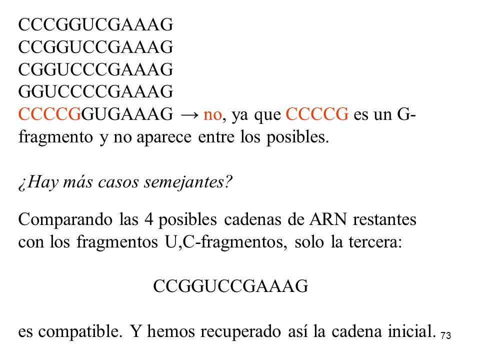 CCCGGUCGAAAGCCGGUCCGAAAG. CGGUCCCGAAAG. GGUCCCCGAAAG. CCCCGGUGAAAG → no, ya que CCCCG es un G- fragmento y no aparece entre los posibles.