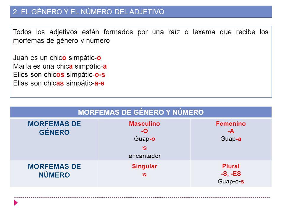 MORFEMAS DE GÉNERO Y NÚMERO