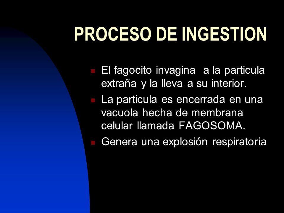 PROCESO DE INGESTION El fagocito invagina a la particula extraña y la lleva a su interior.
