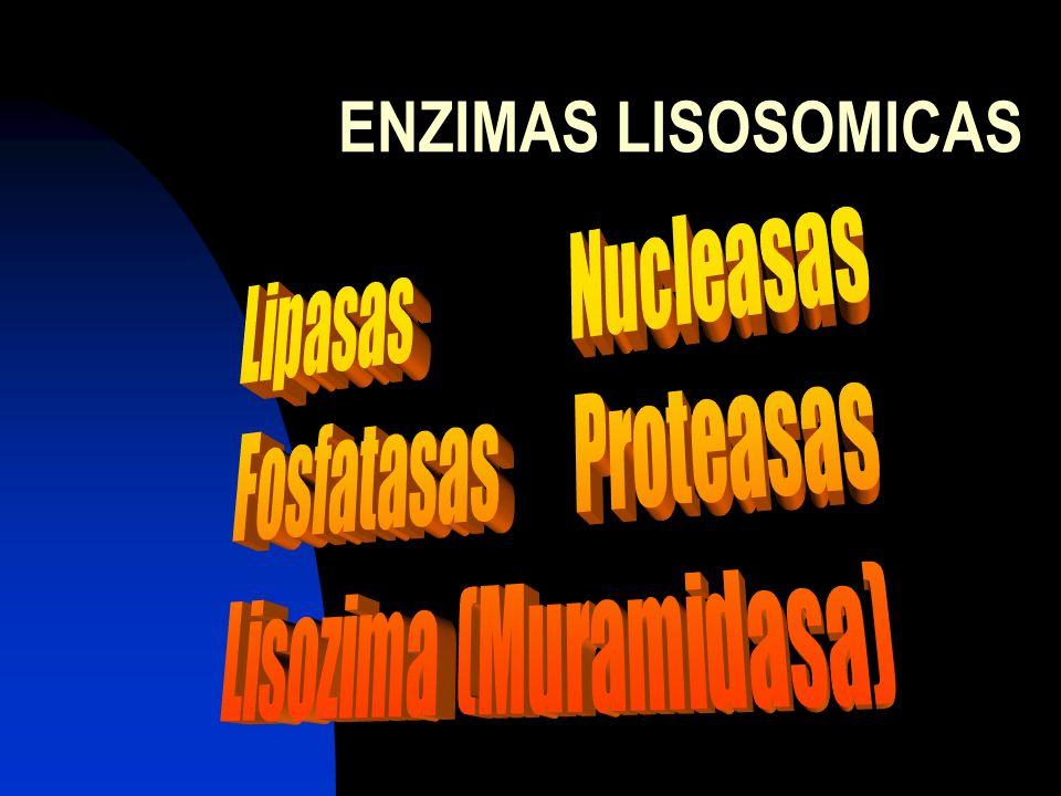 Lisozima (Muramidasa)