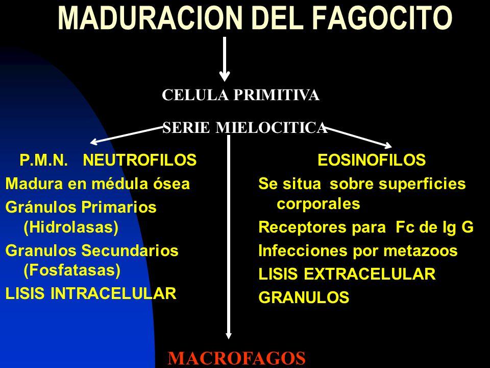 MADURACION DEL FAGOCITO