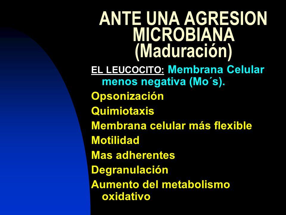 ANTE UNA AGRESION MICROBIANA (Maduración)