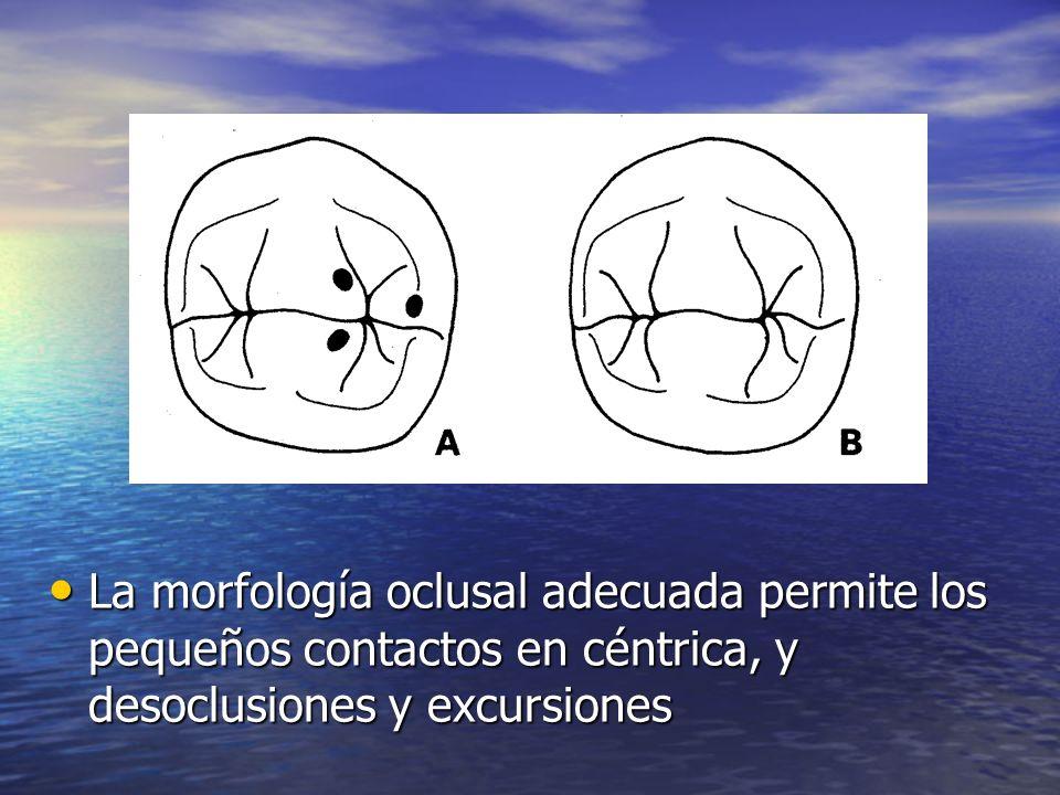 La morfología oclusal adecuada permite los pequeños contactos en céntrica, y desoclusiones y excursiones