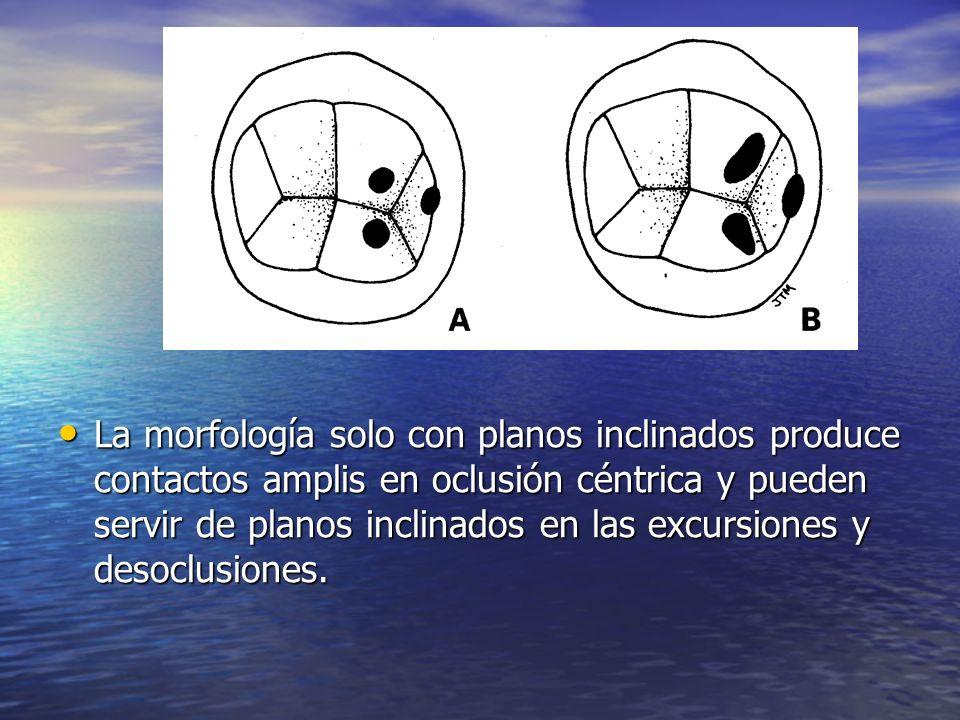 La morfología solo con planos inclinados produce contactos amplis en oclusión céntrica y pueden servir de planos inclinados en las excursiones y desoclusiones.