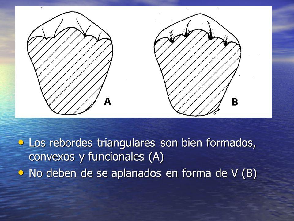 Los rebordes triangulares son bien formados, convexos y funcionales (A)
