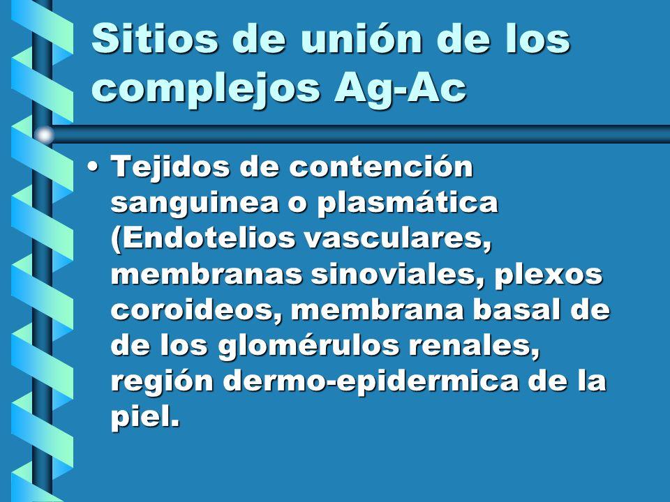 Sitios de unión de los complejos Ag-Ac