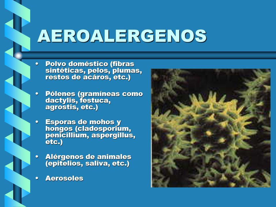 AEROALERGENOS Polvo doméstico (fibras sintéticas, pelos, plumas, restos de acáros, etc.) Pólenes (gramíneas como dactylis, festuca, agrostis, etc.)