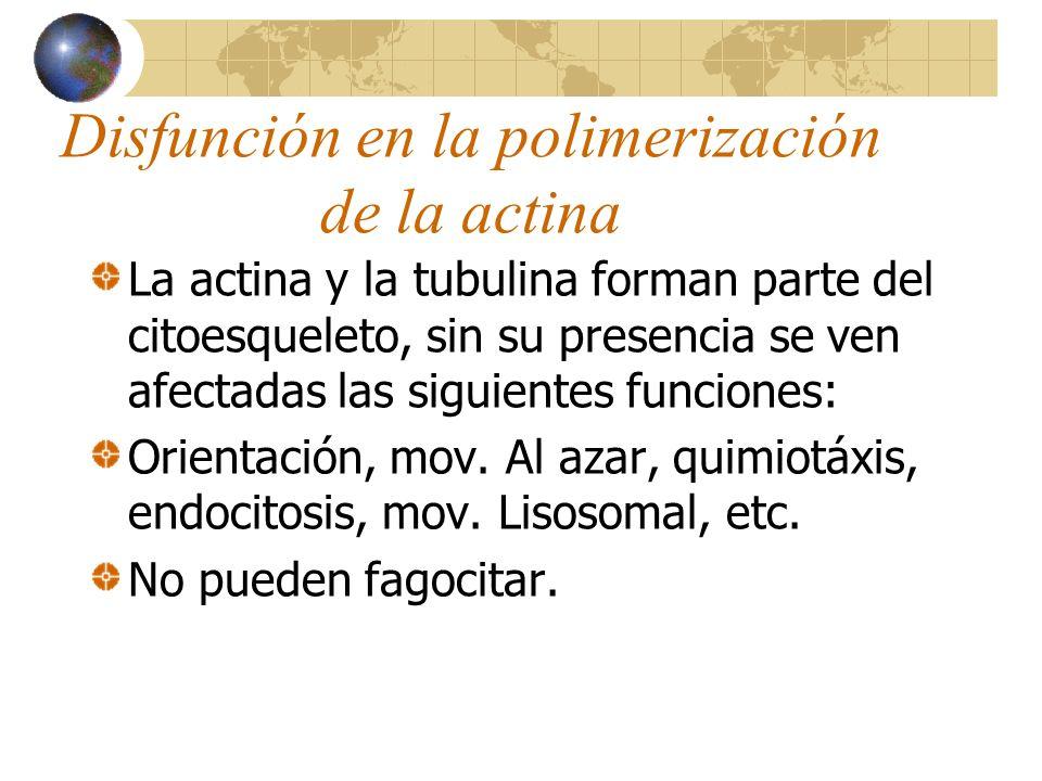 Disfunción en la polimerización de la actina